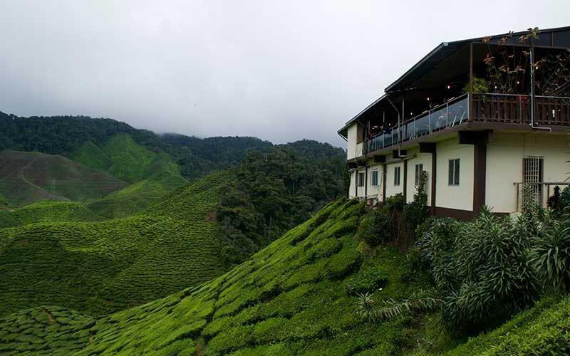 در ارتفاعات کامرون مالزی اینجوری تفریح کنید