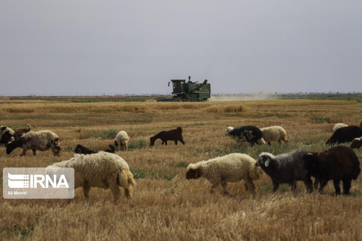 خبرنگاران بخش کشاورزی خراسان رضوی؛ همچنان در اوج