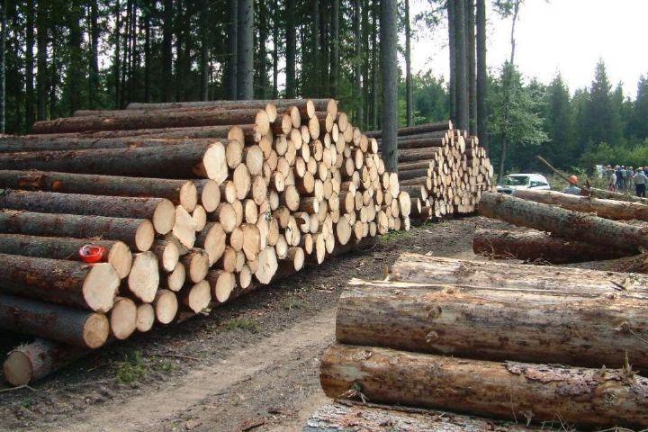 کاهش قاچاق چوب بعد از اجرای طرح تنفس جنگل