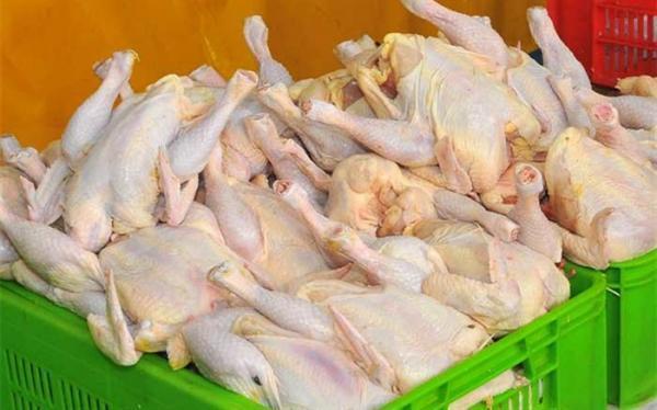 بیش از 3 میلیون قطعه مرغ گرم به بازار عرضه شد